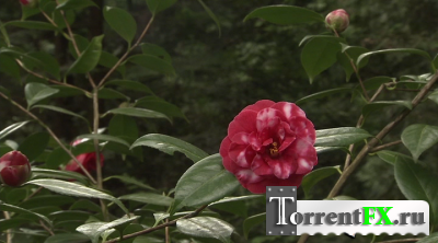 Живые Пейзажи: Сад камней / Living Landscapes: Zen Garden