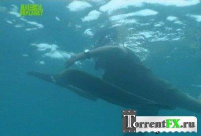 BBC: Самые опасные обитатели океана