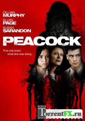 Пикок / Peacock | Лицензия