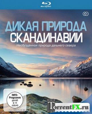 ����� ������� ����������� / Wildes Skandinavien / Wild Scandinavia [01-06 �� 07] (2011) HDRip