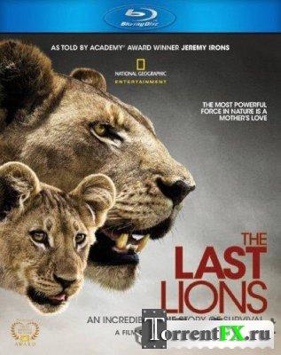 Последние львы / The Last Lions (2011)