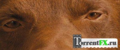 Рыжий пес / Red Dog (2011) HDRip | Лицензия