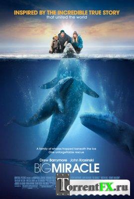 Все любят китов / Big Miracle (2012) BDRip | 1080p