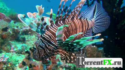 Удивительный океан / Amazing Ocean (2012) BDRip-AVC от ExKinoRay