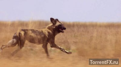 Охота (2015) 1,2,3,4,5,6 серия HDRip
