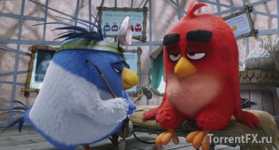 Angry Birds � ���� (2016) BDRip 720p