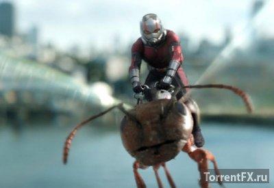 Человек-муравей и Оса (2018) HDRip-AVC от OlLanDGroup